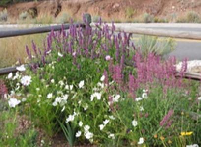 Nance's Garden - September 2015