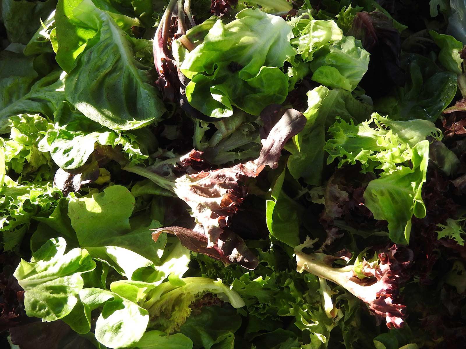 Santa Fe Farmers Market - Lettuce