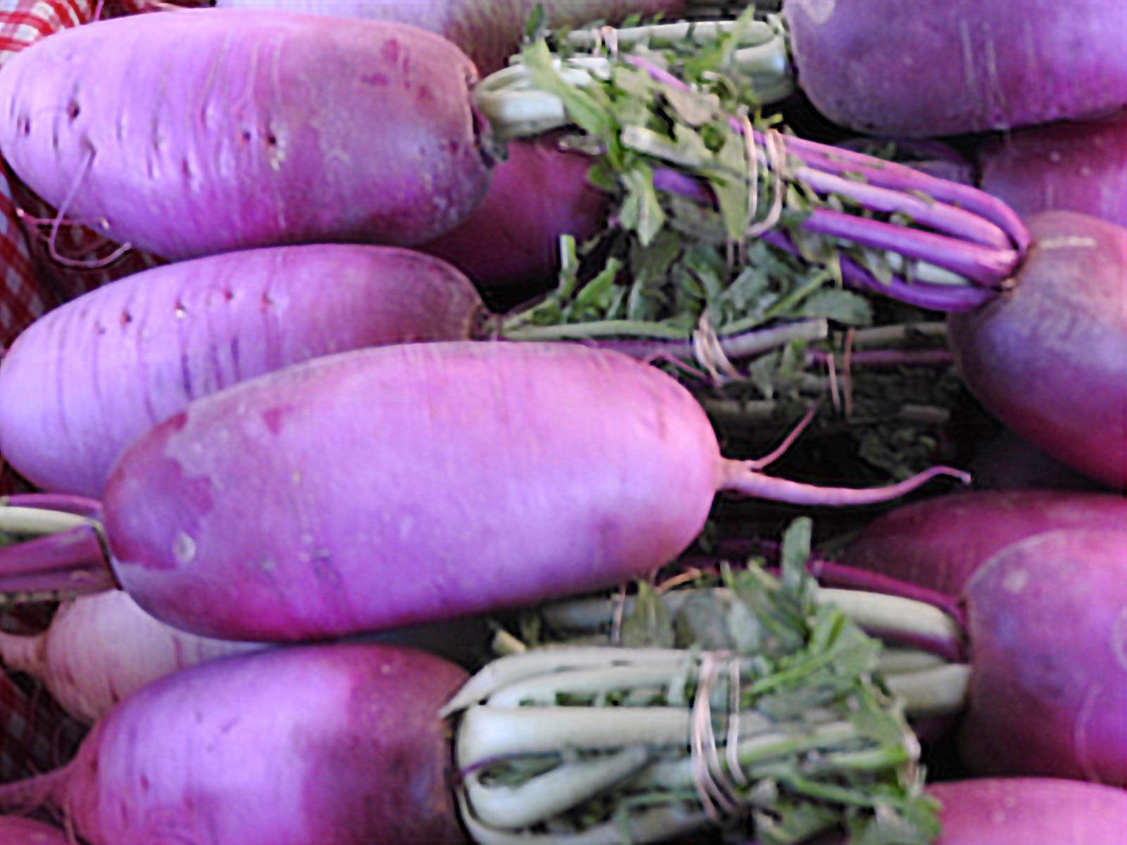 Santa Fe Farmers Market - Radishes