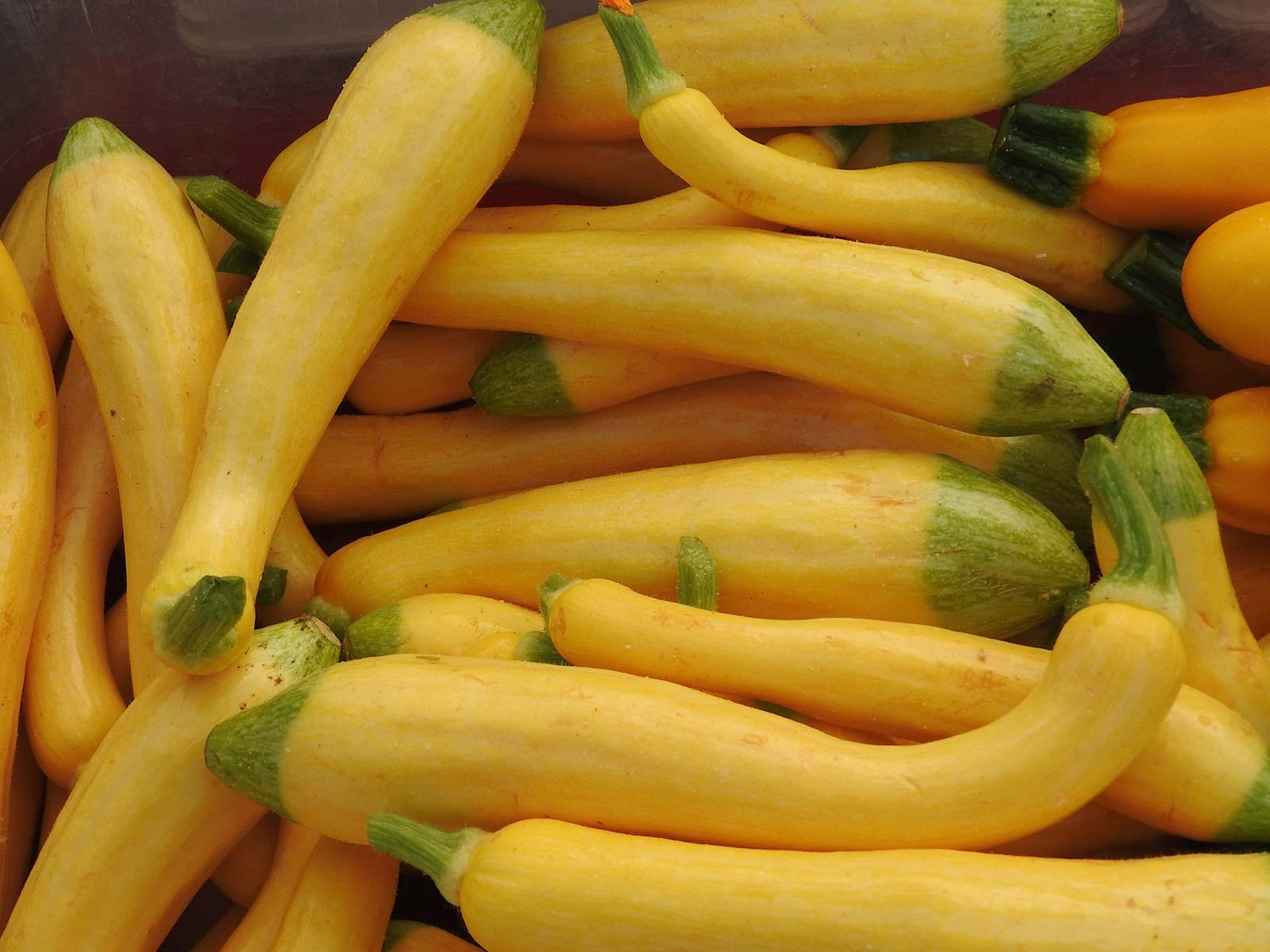 Santa Fe Farmers Market - Squash