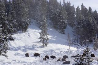 Yellowstone - 2013 - 2