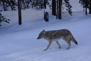 Yellowstone - 2013 - 4