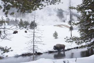 Yellowstone - 2013 - 8