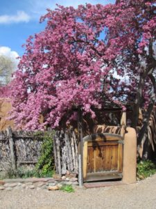Photo of a path in Santa Fe with redbud tree