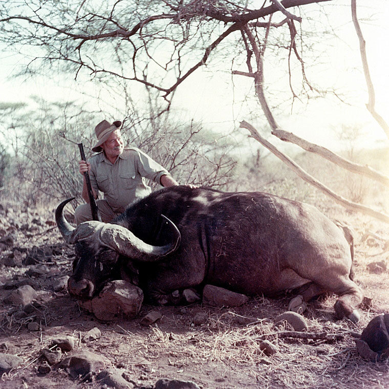Ernest Hemingway poses with water buffalo, Africa 1953