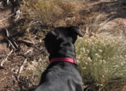 Pip Goes To Taos - 2