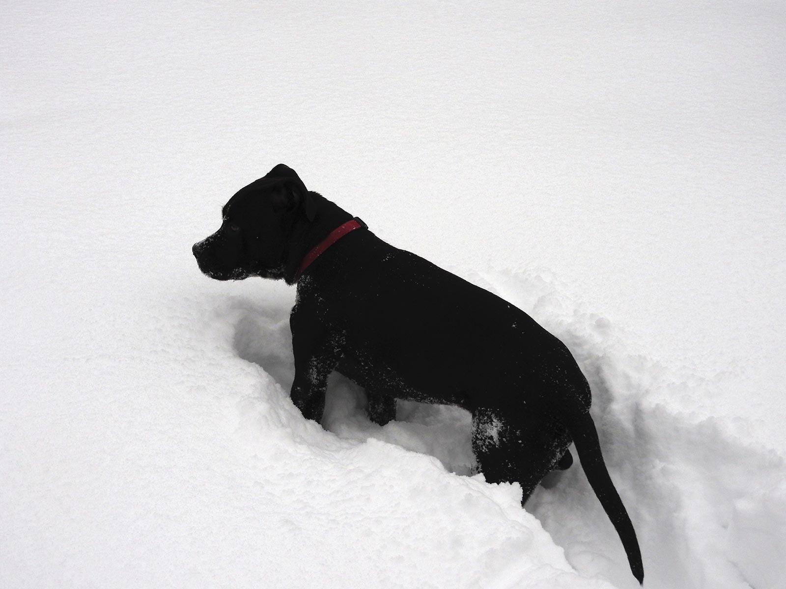 Black Pip - Snow