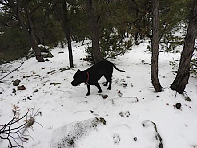 Black Pip in New Snow