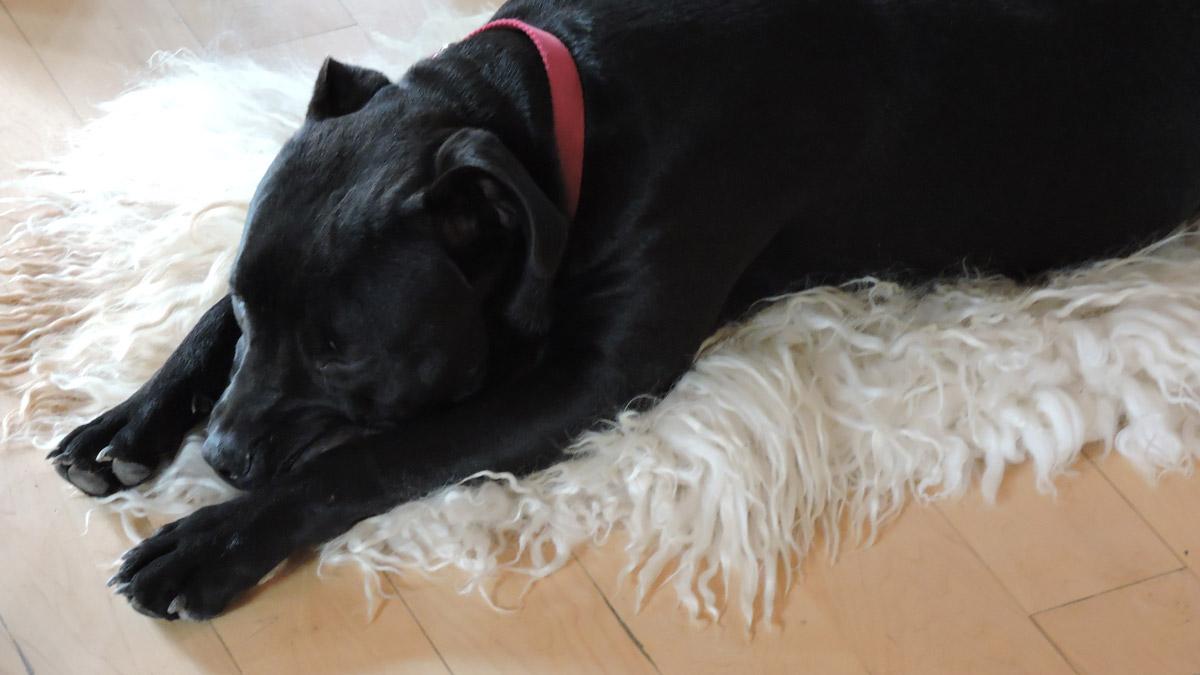 Black Pip Sleeping