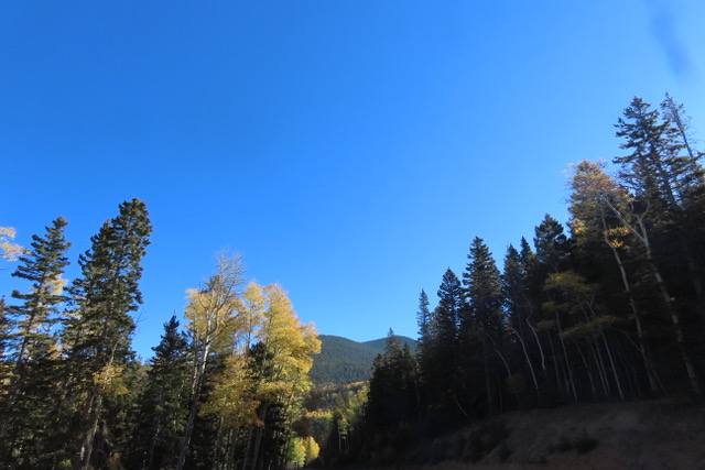 Photo of golden Aspen trees in mountain forest
