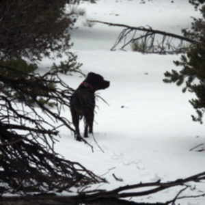 Photo of Pip in the Snow - 2021