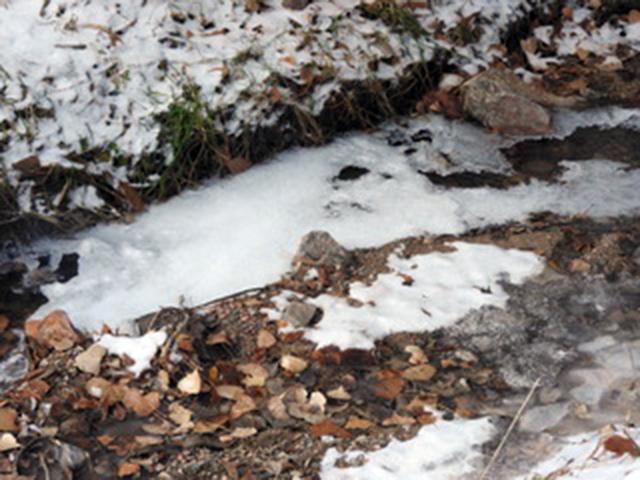 Pip in Winter