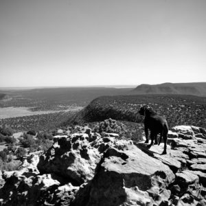 Black and white photo of the dog Pip on Apache Mesa