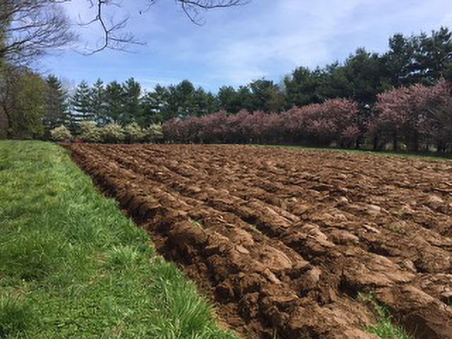 Spring Planting - Wolf Pen Mill Farm, Kentucky